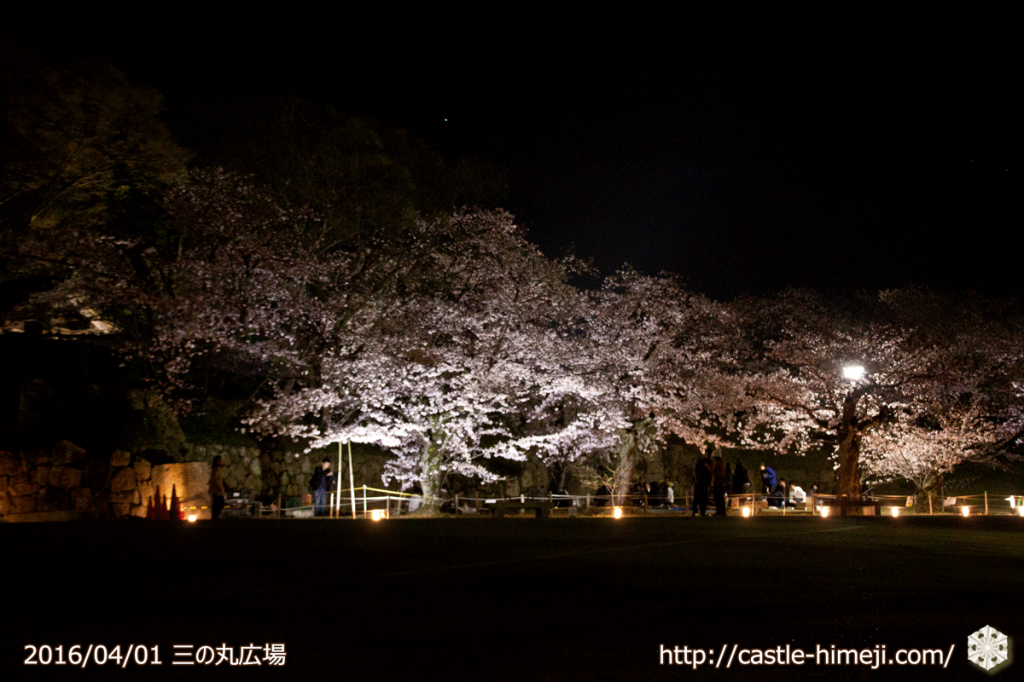 cherry-blossoms-light-up-off_02