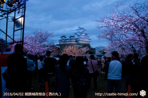 cherry-blossoms-night2016-blue_05