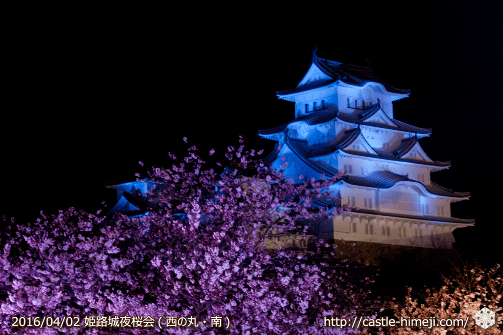 cherry-blossoms-night2016-blue_12