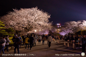 cherry-blossoms-night2016-blue_17