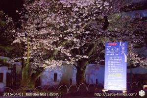 cherry-blossoms-night2016-white_06