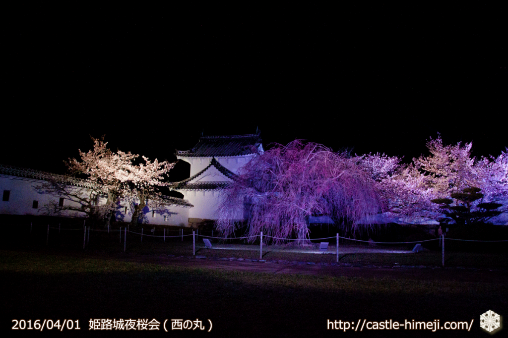 cherry-blossoms-night2016-white_07