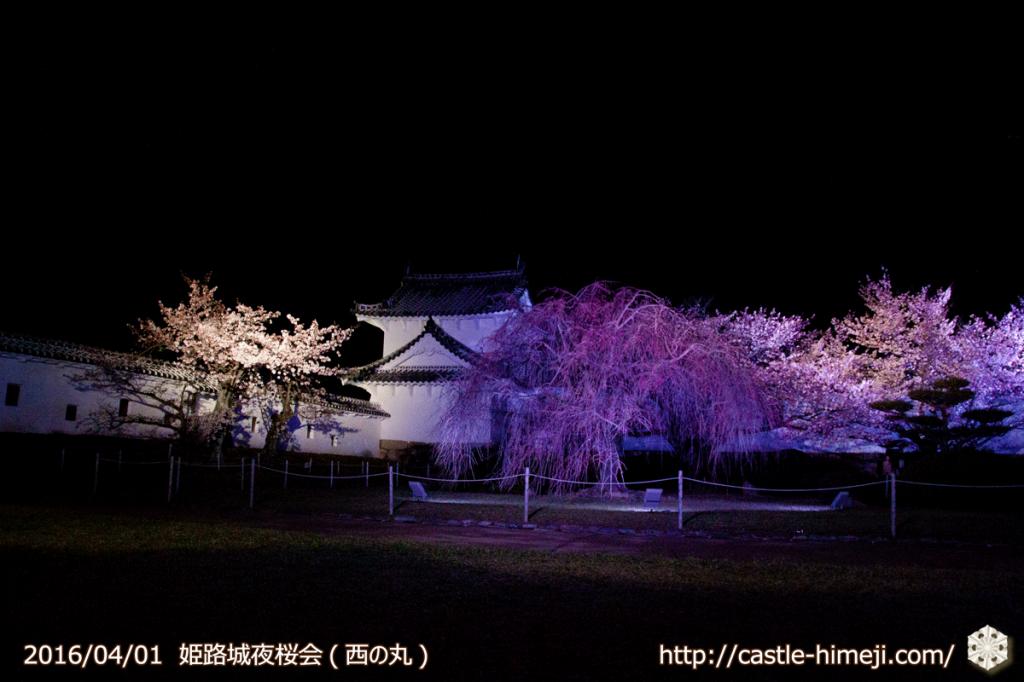 cherry-blossoms-night2016-white_07