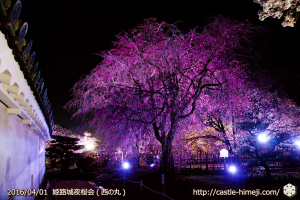 cherry-blossoms-night2016-white_09