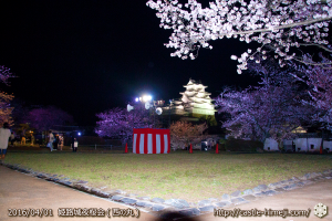cherry-blossoms-night2016-white_11