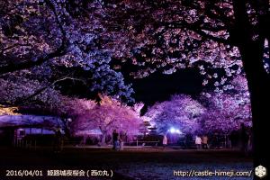 cherry-blossoms-night2016-white_15