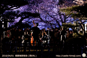 cherry-blossoms-night2016-white_21