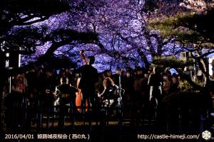 cherry-blossoms-night2016-white_21