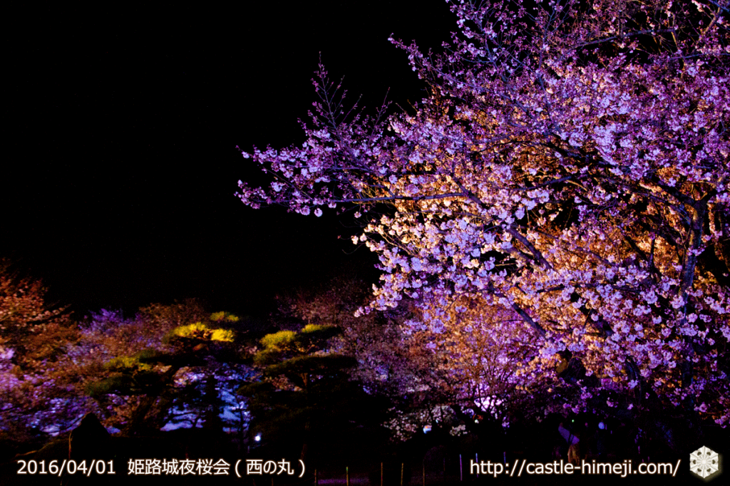 cherry-blossoms-night2016-white_22