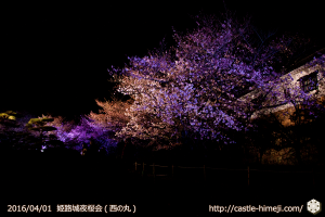 cherry-blossoms-night2016-white_23