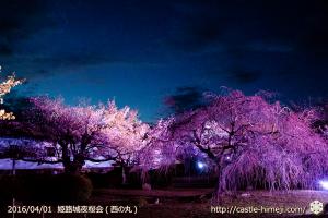 cherry-blossoms-night2016-white_27