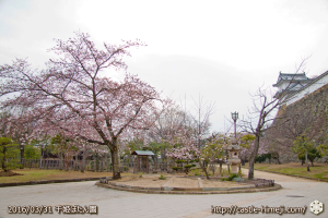cherry-blossoms20160331_07