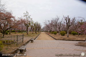 cherry-blossoms20160401_05