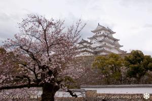 cherry-blossoms20160401_07