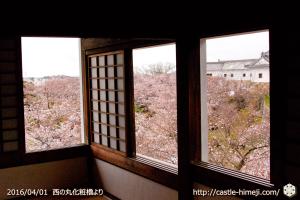 cherry-blossoms20160401_17