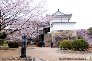 cherry-blossoms20160401_18