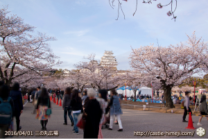 cherry-blossoms20160402_01