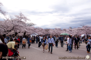 cherry-blossoms20160402_02