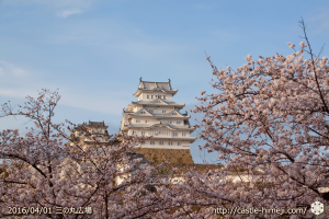 cherry-blossoms20160402_03