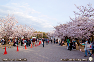 cherry-blossoms20160402_05