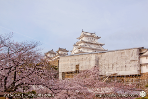 cherry-blossoms20160402_08