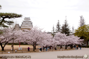 cherry-blossoms20160404_05