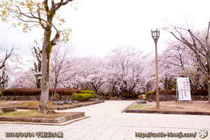 cherry-blossoms20160404_06