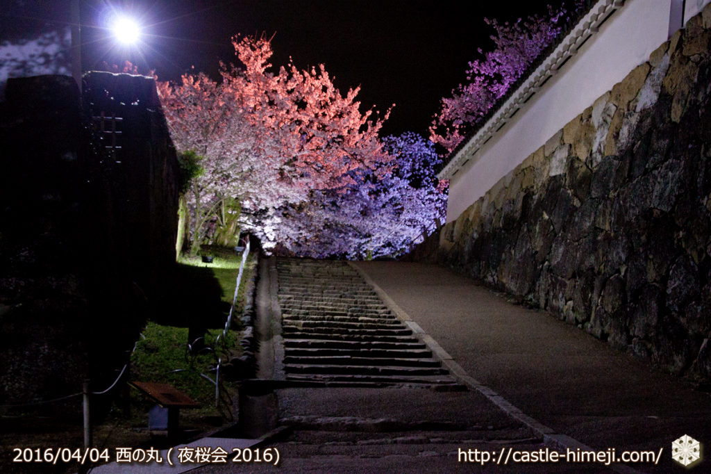 cherry-full-bloom-night2016_04