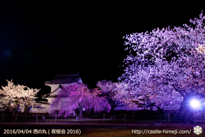 cherry-full-bloom-night2016_10