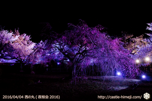 cherry-full-bloom-night2016_12
