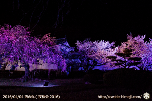 cherry-full-bloom-night2016_14