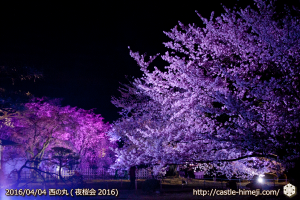 cherry-full-bloom-night2016_19