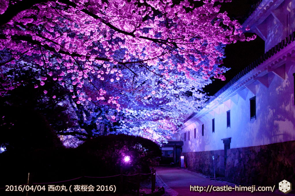 cherry-full-bloom-night2016_24