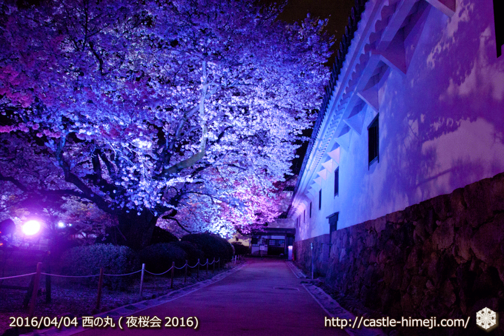 cherry-full-bloom-night2016_25