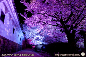 cherry-full-bloom-night2016_26