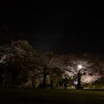 eye_cherry-blossoms-light-up-off