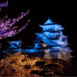 eye_cherry-blossoms-night2016-blue