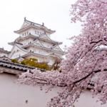 eye_cherry-blossoms20160404