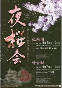 2017-cherry-blossoms-night_01