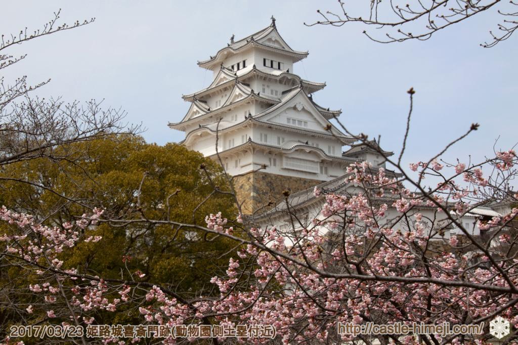 bud-tinted-cherry-blossom2_03