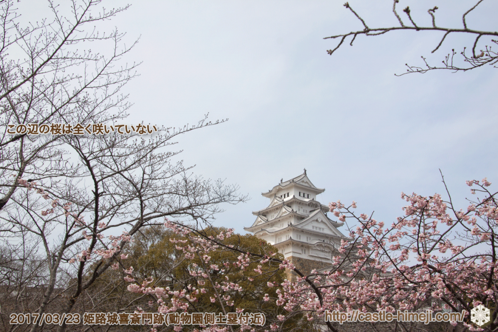 bud-tinted-cherry-blossom2_04