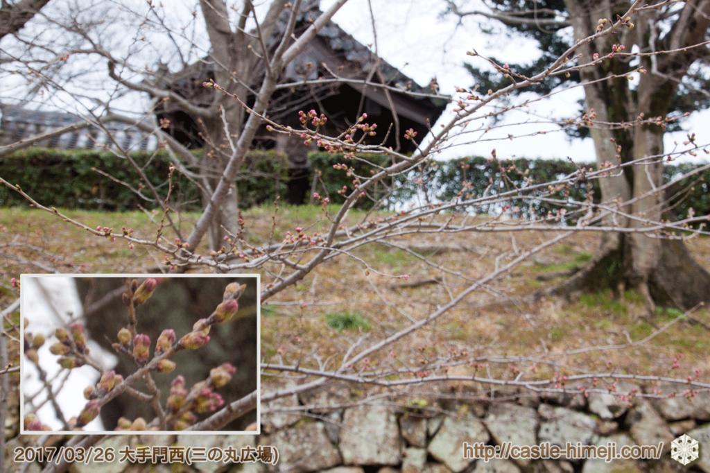 yamanaka-flowering_01