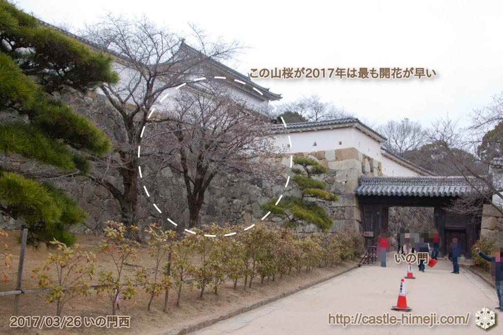 yamanaka-flowering_02