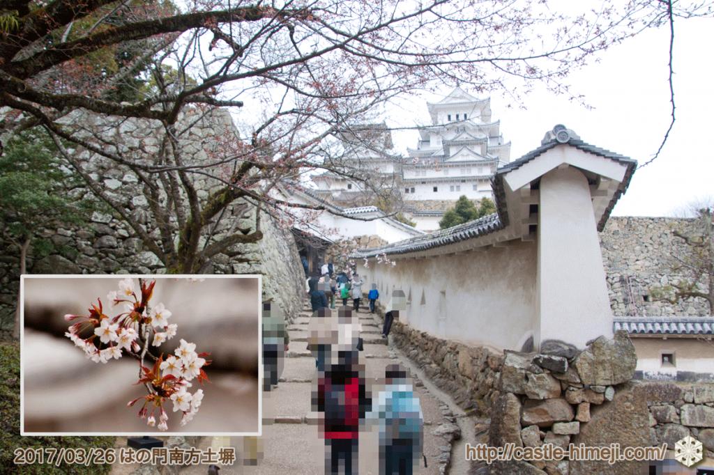 yamanaka-flowering_05