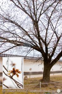 yamanaka-flowering_08