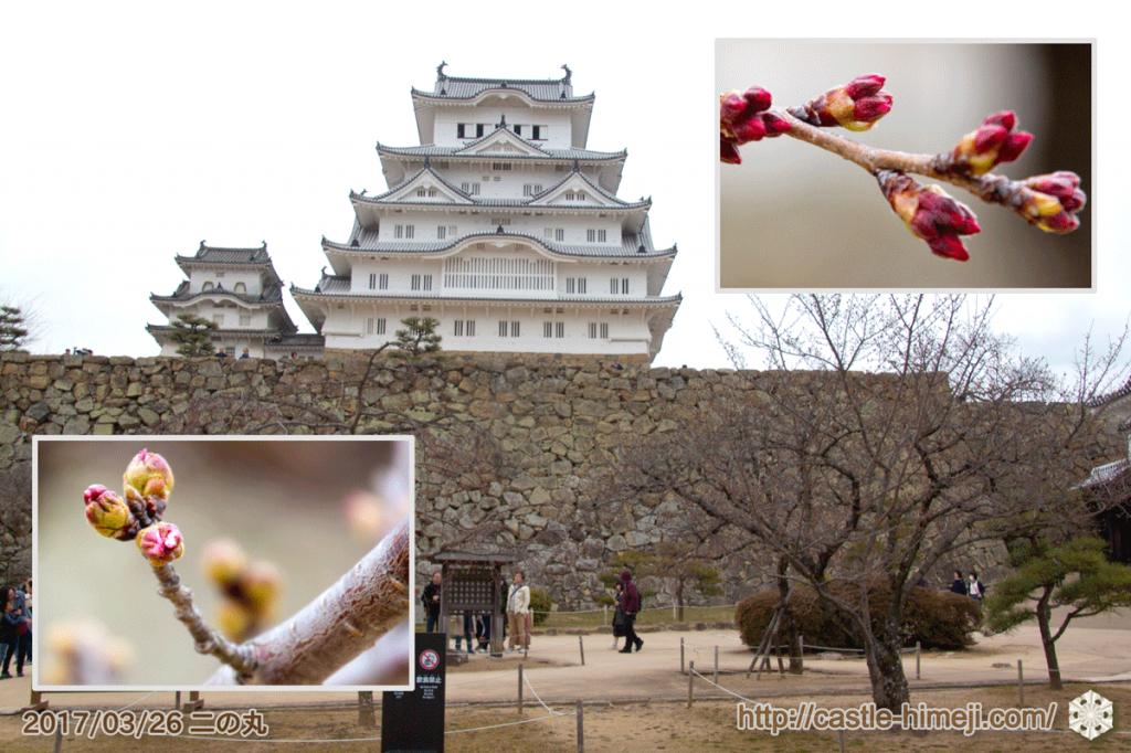 yamanaka-flowering_09