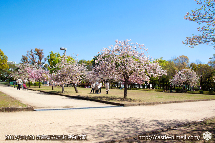 110per-bloom-late-cherry-blossom_08