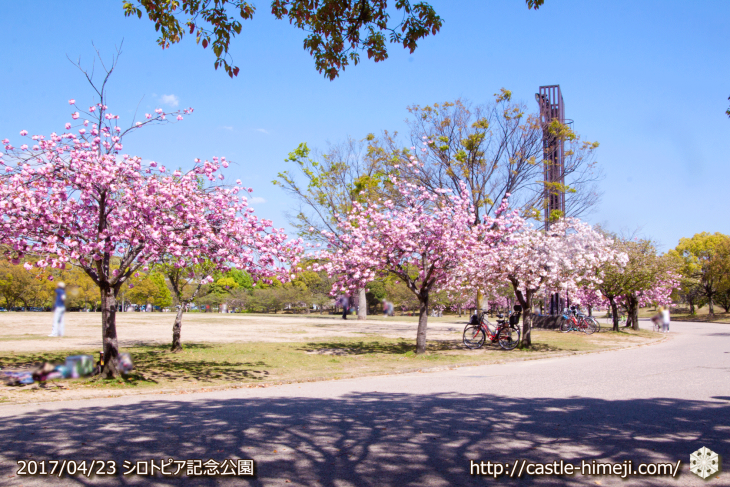 110per-bloom-late-cherry-blossom_14