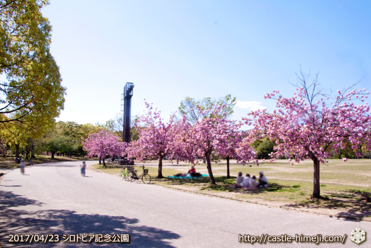110per-bloom-late-cherry-blossom_15