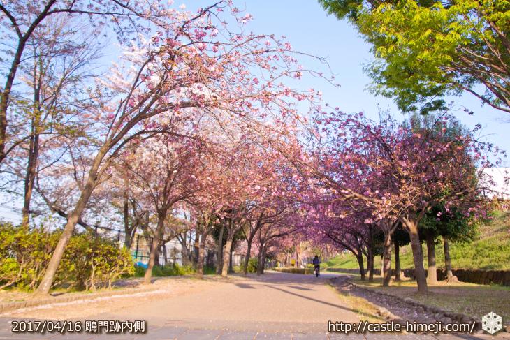 30per-bloom-late-cherry-blossom_02